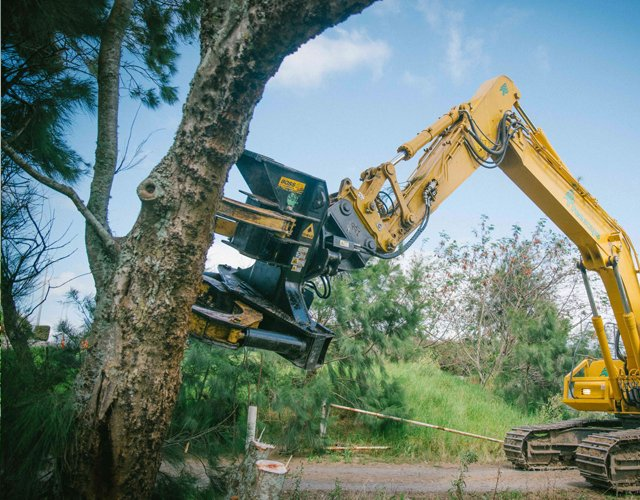 Tree-Removal