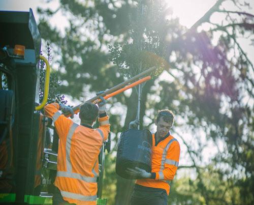 Treescape staff Planting trees