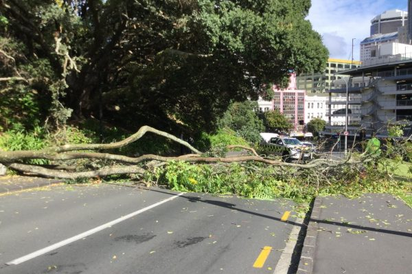 Fallen Tree in Auckland CBD